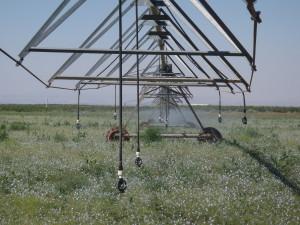 Irrigating Pasture