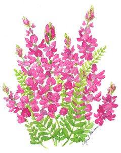 Aprils Flowers vetch-1