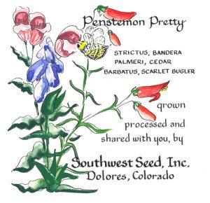 Penstemon Pretty
